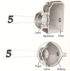How the retina works